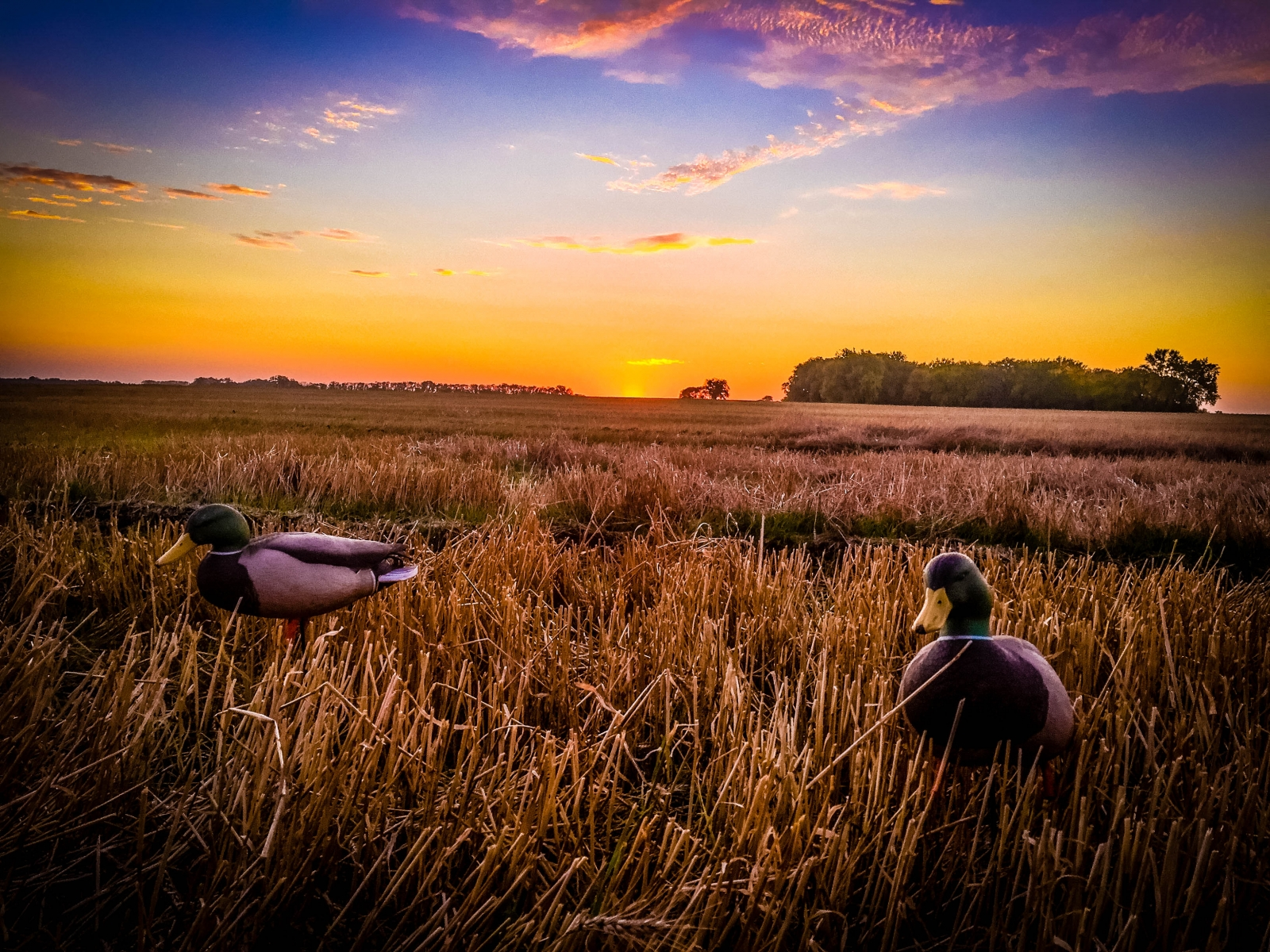 Prairie Sunrise from the Decoys