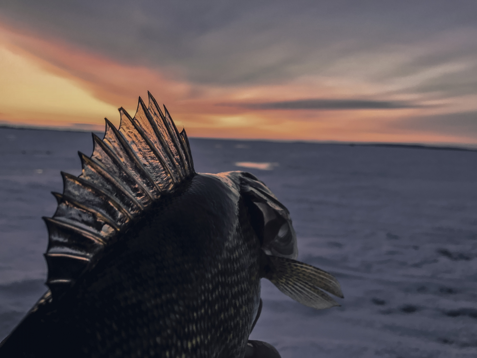 Winter Time Sunsets are Best With a Fish in Hand