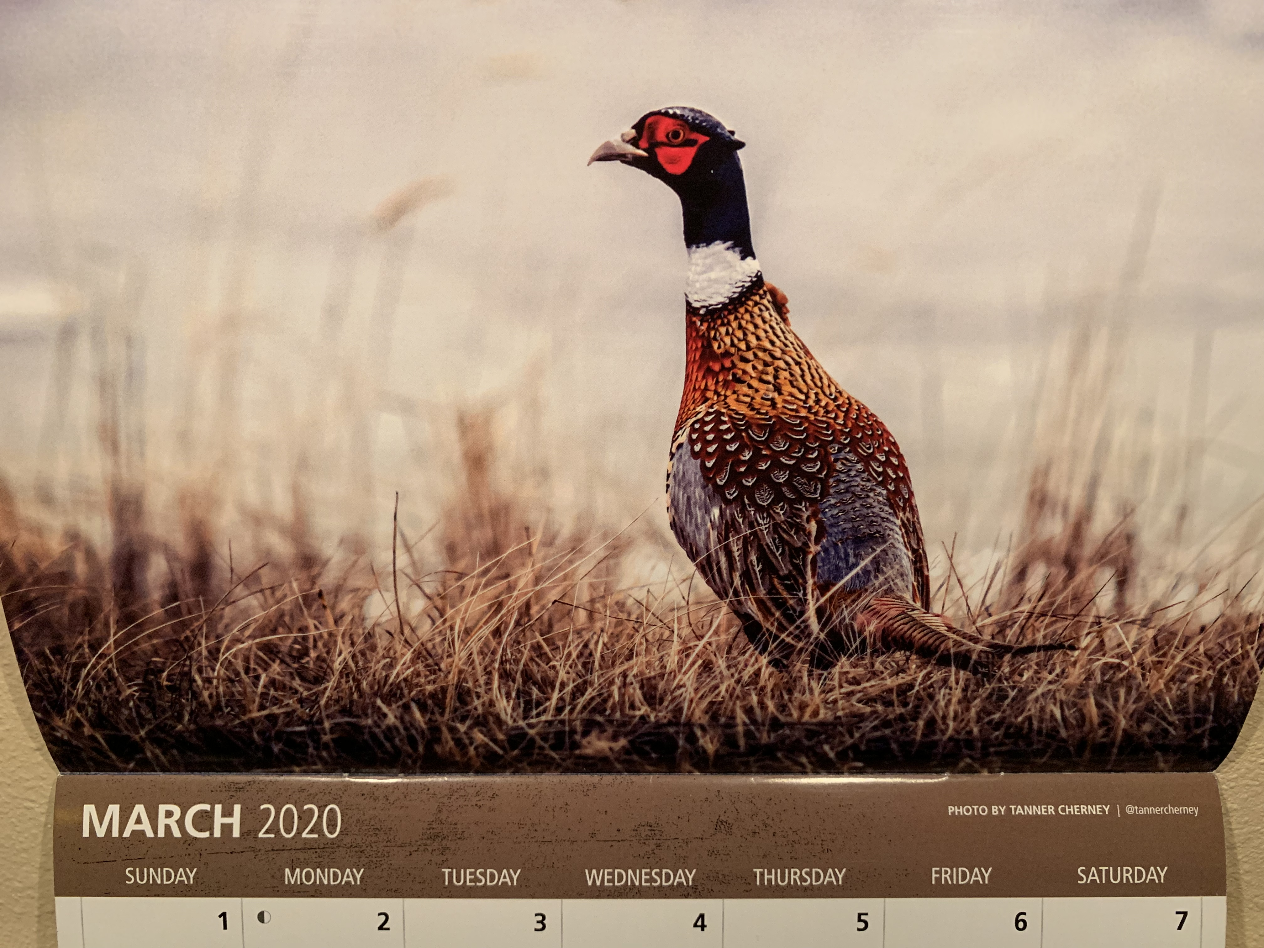 2020 Pheasant Forever Calendar Photo by Tanner Cherney of Peak Productions