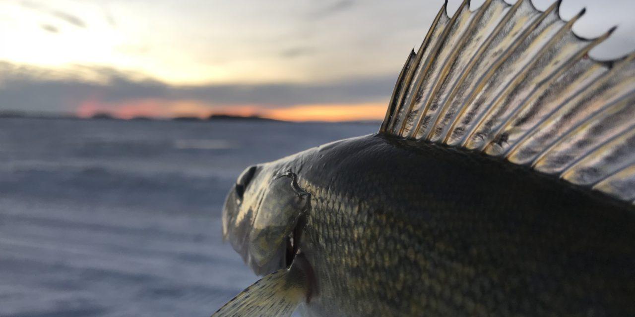 Devils Lake Walleye