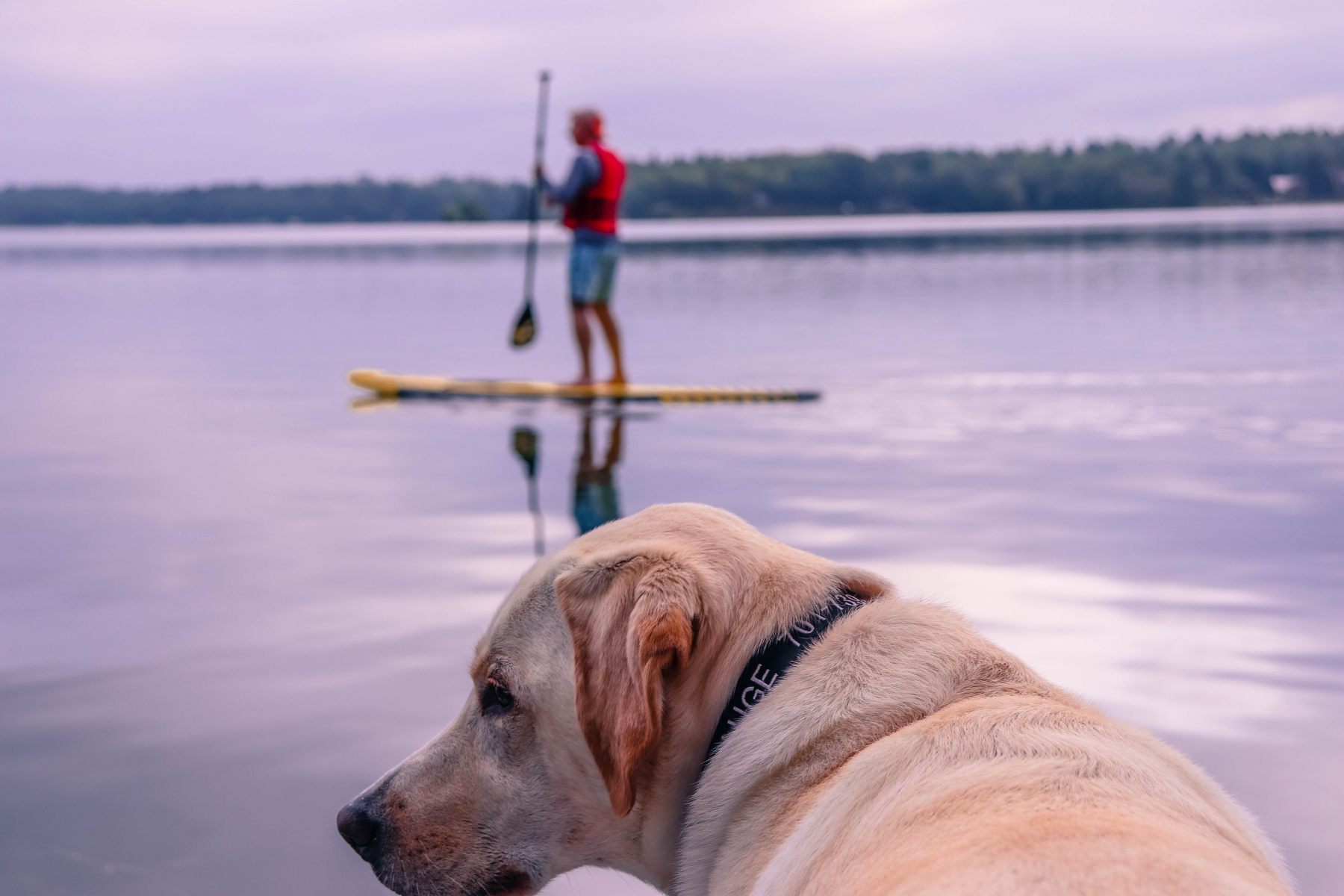 Dog Waiting for Paddle boarder
