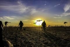 Early Morning Waterfowl Hunt in a Bean Field